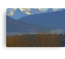 Tundra Swans, Skagit Washington Canvas Print
