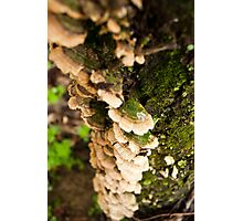 Natural Tree Shelves 2 Photographic Print