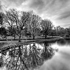 Central Park Reflections by Nate Lam