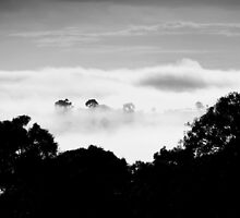 ~ Black & White ~ by LeeoPhotography