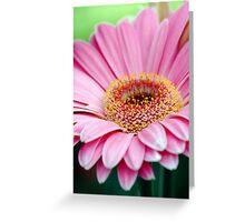 Fresh Daisy Greeting Card