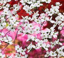 Dogwood Blossom Lattice by Oscar Gutierrez