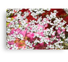 Dogwood Blossom Lattice Canvas Print