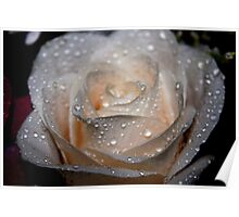 Rose and Raindrops 2 Poster