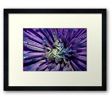 The beauty of flowers Framed Print