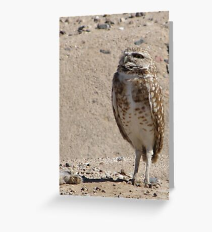 Burrowing Owl ~ Sky Scanning Greeting Card