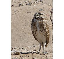 Burrowing Owl ~ Sky Scanning Photographic Print