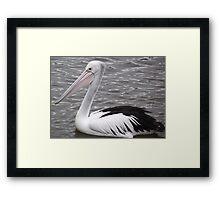 pelican - n.w. Tasmania Framed Print