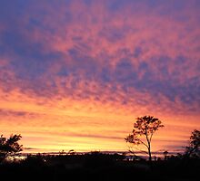 Sunrise - what a beautiful time of the morning! by Susan Moss