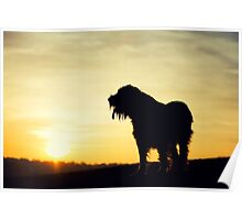 Brown Roan Italian Spinone Dog Sunset Poster