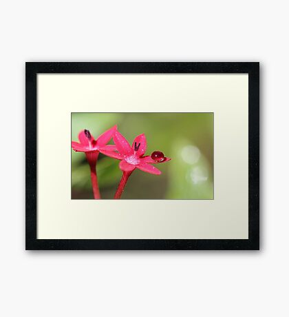perfection Framed Print