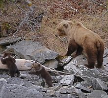 Alaskan Coastal Brown Bear and spring cubs by Margaret  Hyde