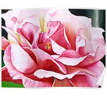 Rose Petals - vibrant oil painting of an English rose Poster
