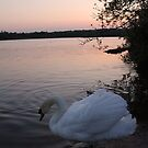 Swan at Sunset 3 by Mike Topley