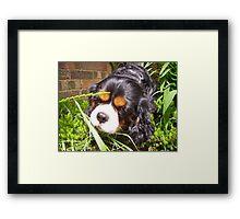 Cavalier King Charles - Odie Jungle Framed Print