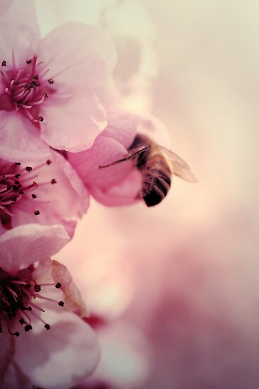 Bee in Pink  by yolanda