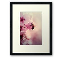 Bee in Pink  Framed Print