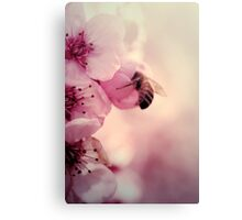 Bee in Pink  Canvas Print