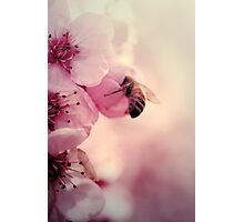 Bee in Pink  Photographic Print