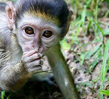 Baby Monkey by Jip v K