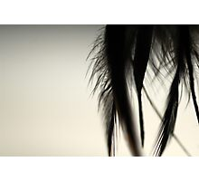 Feathers of Bibi Photographic Print