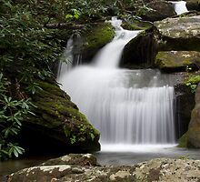 Catawba Headwaters Two by Forrest Tainio