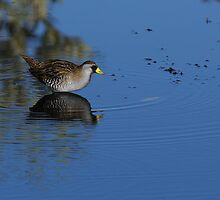 Sora Reflection by Tom Dunkerton