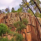 Kaputar Sawn rocks  by Virginia McGowan