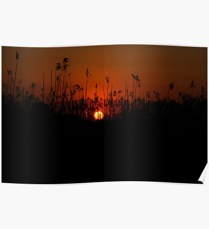 Sunset on the River- St. John's River Poster