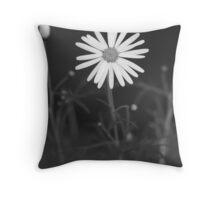 argyranthemum better known as marguerites daisy  Throw Pillow