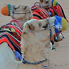 One Hump or Two? by Lisa Baumeler