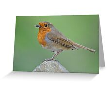 Robin collecting Dinner Greeting Card