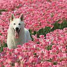Tulip dog by DutchLumix