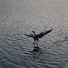 Walking On Water by Mike Topley