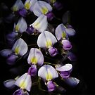 Wisteria 2 by Annabelle Evelyn