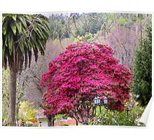 Vibrant Unknown Tree Poster