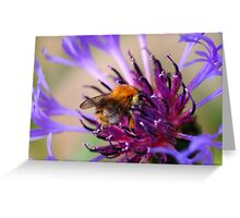 Mountain Cornflower and a Bumble Bee Greeting Card