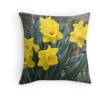 Daffodils 2011 Throw Pillow