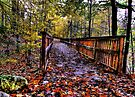 Bridge in the Forest  by Marcia Rubin