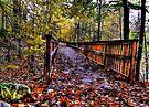 Bridge in the Forest  by Marcia Rubin