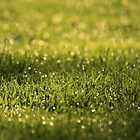 Raindrops on Green Grass by reindeer