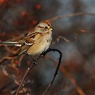 American Tree Sparrow- Jamiaca Bay WR by Tom Dunkerton