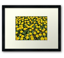 YELLOW TULIPS! Framed Print
