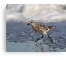Jogging on the Beach- Black-bellied Plover Canvas Print