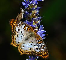 Party on the Pickerelweed by Tom Dunkerton