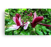 Deep Magnolia Canvas Print