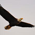 Full Spread Wings by Tom Dunkerton