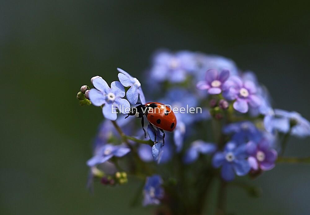 Ladybird... by Ellen van Deelen