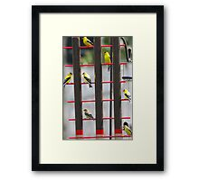 Gold Finch Feeding Time Framed Print