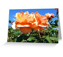 """""""Sunshine On A Cloudless Day"""" Greeting Card"""